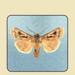 Copertina 67-2012_Page_1